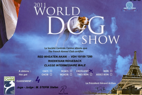 Red Wheaten Akani´s Urkunde von der World Dog Show in Paris 2011