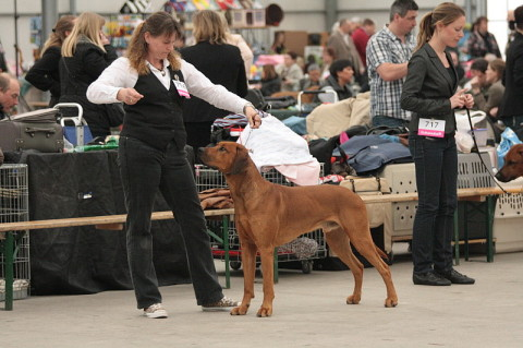 Akani auf der Internationalen CACIB Dogshow in Leiden