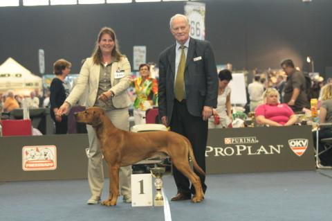 Rhodesian Ridgeback Red Wheaten Akani wird Weltsieger 2012 in Salzburg