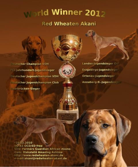 Red Wheaten Akani, Worldwinner 2012, Deutscher Champion VDH, FCI Jahrhudert-Jugendsieger, Saarbrückensieger 2012.......