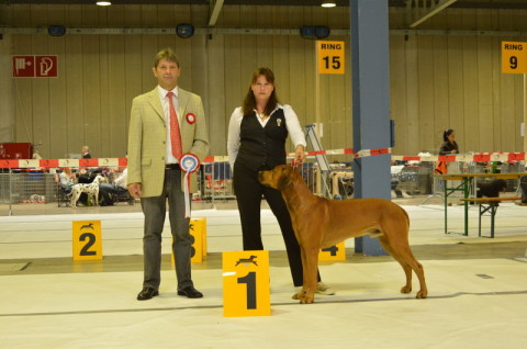 Luxembug Champion Red Wheaten Akani