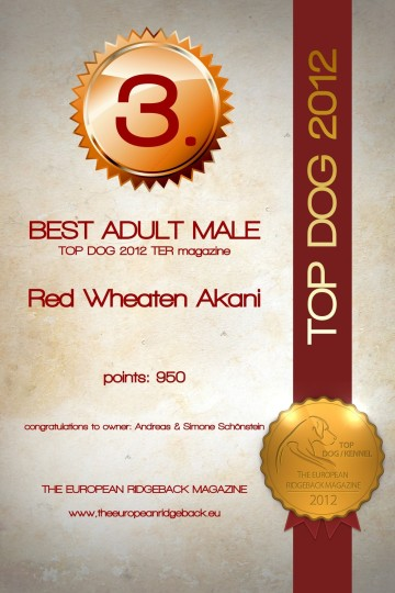 Akani TOP DOG best Adult male Place 3