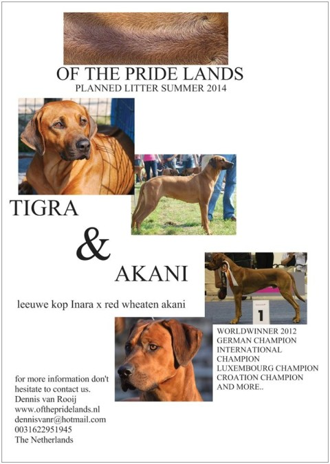 Wurfplanung Kennel Of the Pride Lands