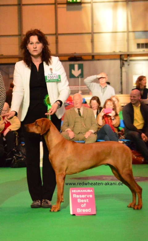 Rhodesian Ridgeback Jalia Crufts Winner 2014 res. best of breed