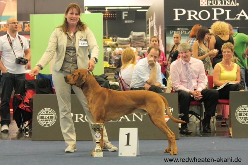Rhodesian Ridgeback Akani wird Weltsieger in Salzburg