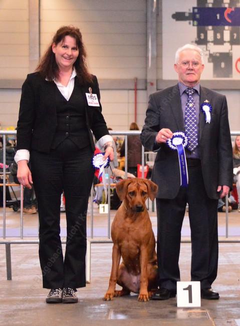 Belgischer Champion Rhodesian Ridgeback Jalia erzielt auf der Flanders Dog Show in Gent V1 CAC CACIB