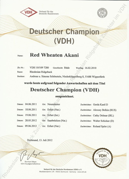 Red Wheaten Akani Deutscher Champion VDH
