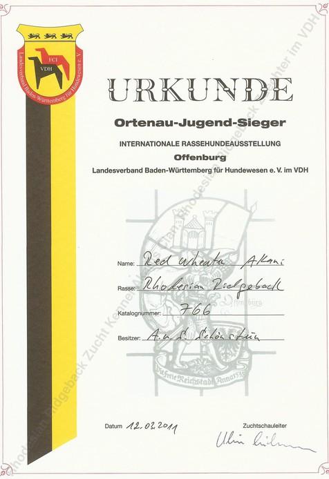 Red Wheaten Akani Rhodesian Ridgeback Ortenau-Jugend-Sieger