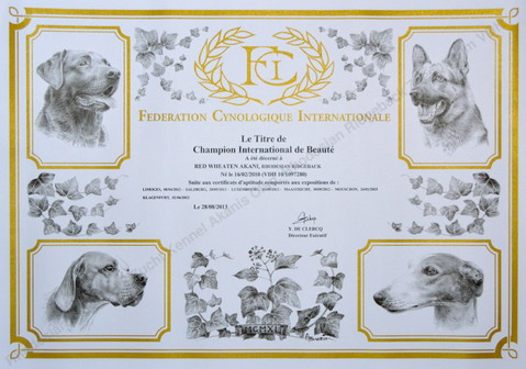 Rhodesian Ridgeback Red Wheaten Akani Internationaler Champion