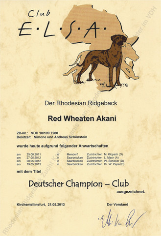 Rhodesian Ridgeback Club Champion Red Wheaten Akani