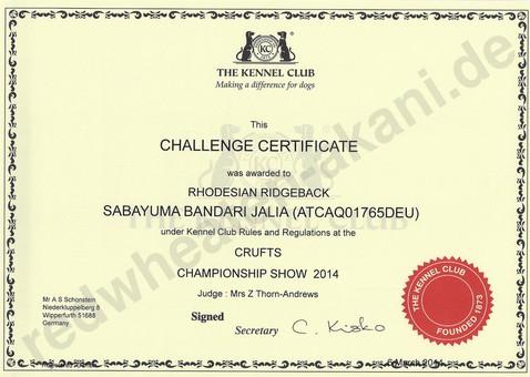 Rhodesian Ridgeback Challenge Certificate Crufts 2014 Championship Show