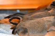 Jalia und Akani´s Puppies