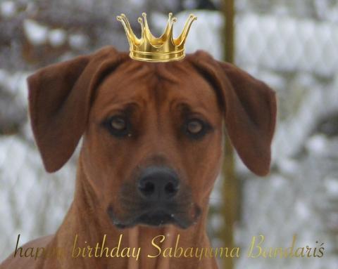 Jalia hat Geburtstag