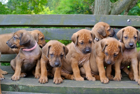 Akani´s und Hestia´s Puppies.