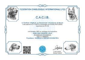 CACIB Cuijk (NL)