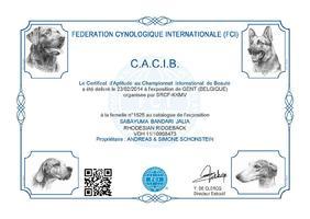 CACIB Gent (B)