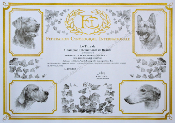 Internationaler Champion Red Wheaten Akani