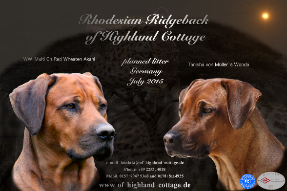 Rhodesian Ridgeback Red Wheaten Akani und Tanisha