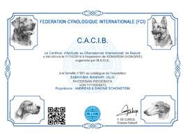 CACIB Urkunde Rhodesian Ridgeback