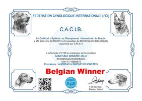 CACIB Brüssel (B) Belgian-Winner