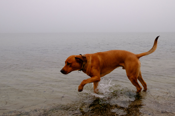 Neo im Wasser