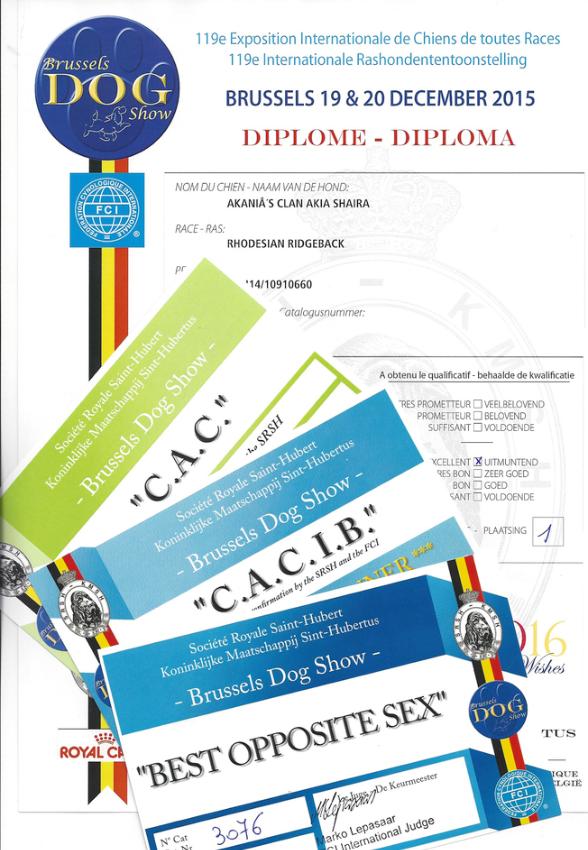 Belgian Winner 2015 Rhodesian Ridgeback Akani´s Clan Akia Shaira