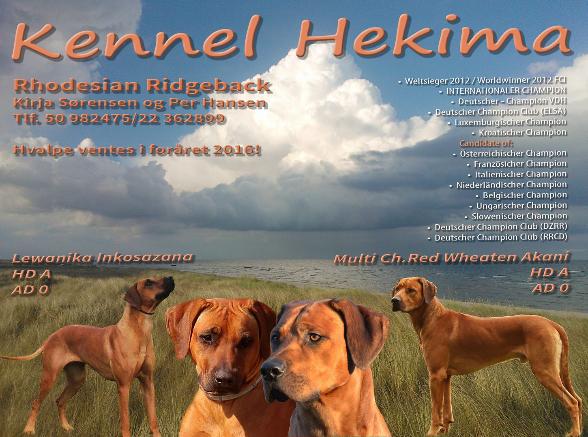 Kennel Hekima Dänemark Wurfankündigung Rhodesian Ridgeback