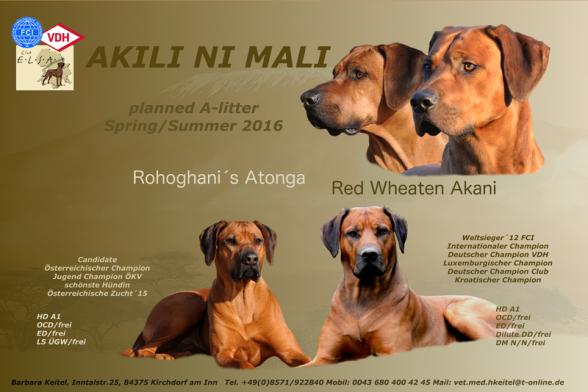 Akani und Atonga Wurfankündigung Rhodesian Ridgeback Welpen
