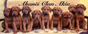 A-Wurf Welpen Rhodesian Ridgeback Kennel Akani´s Clan