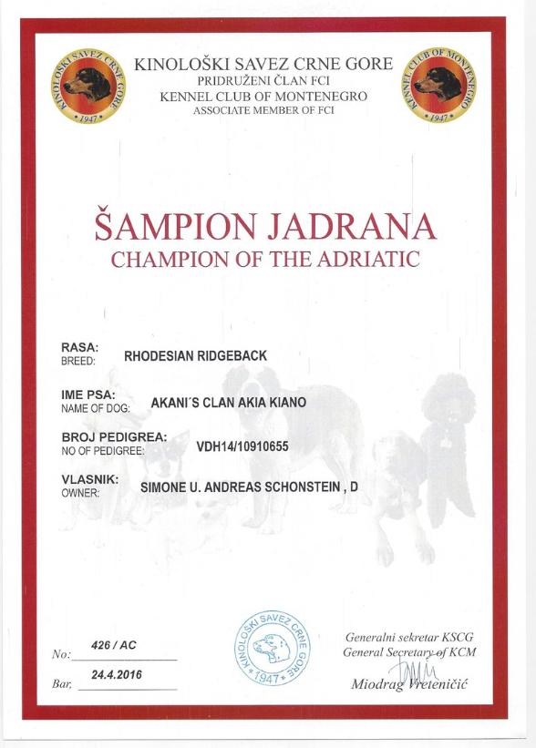 Urkunde für den Adria Champion von Rhodesian Ridgeback Kiano