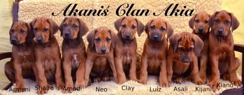 A Wurf Akanis Clan Akia Rhodesian Ridgeback