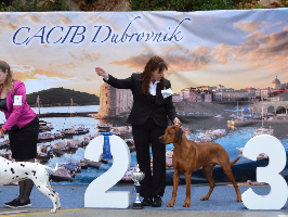 CACIB Dubrovnik best in Group 2