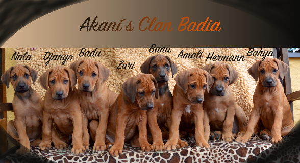 Akani´s Clan Badia