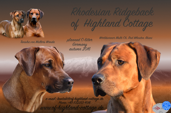 Collage of Highland Cottage C-litter