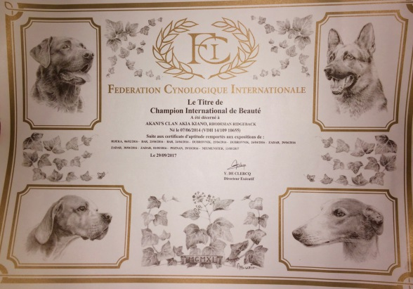 Rhodesian Ridgeback Rüde Internationaler Champion