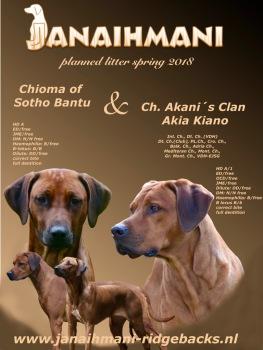 Deckankündigung Kiano und Imani Rhodesian Ridgeback