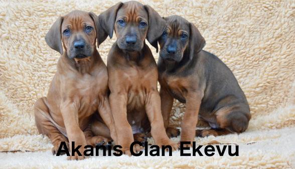 Akani´s Clan Ekevu