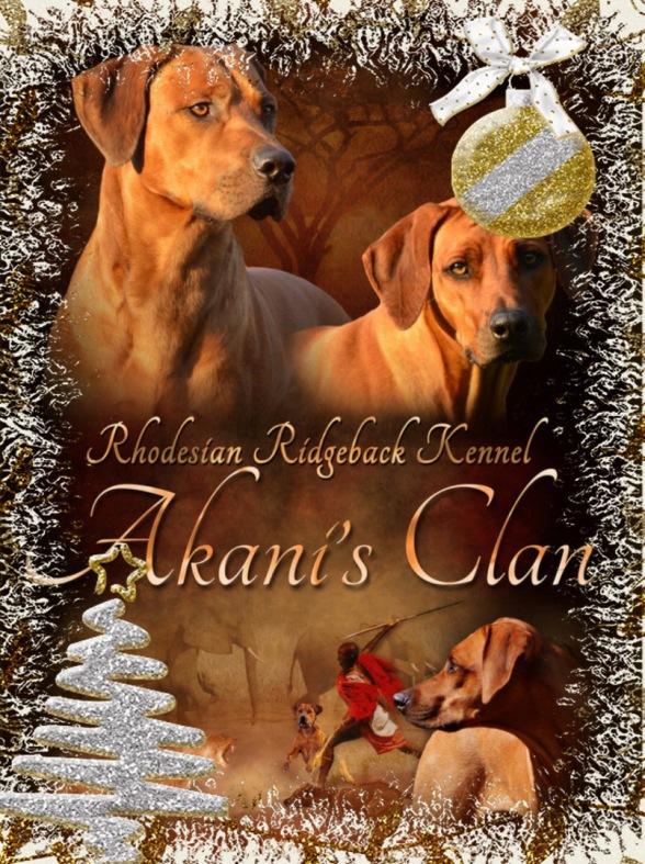 frohe Weihnachten von der Rhodesian Ridgeback Zucht Akanis Clan