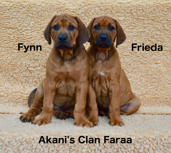 Akanis Clan F Wurf
